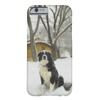Dog sitting in snow with log cabin behind barely there iPhone 6 case