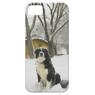 Dog sitting in snow with log cabin behind iPhone 5 covers