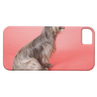 Dog sitting iPhone 5 covers