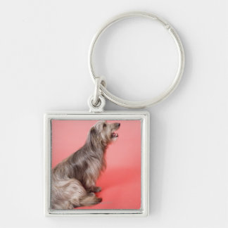 Dog sitting key ring