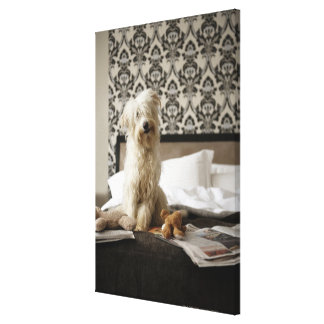 Dog sitting on bed with soft toys and newspaper stretched canvas print