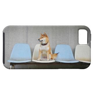 Dog sitting on bench iPhone 5 case