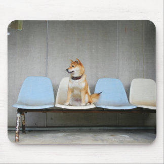 Dog sitting on bench mouse mat