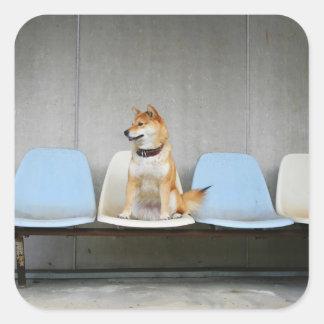 Dog sitting on bench square sticker