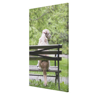 Dog sitting on park bench canvas print