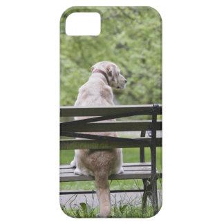 Dog sitting on park bench iPhone 5 case