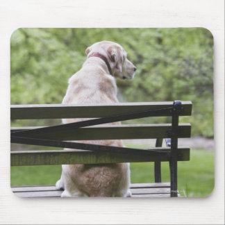 Dog sitting on park bench mouse pad