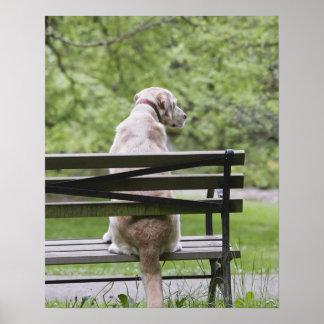 Dog sitting on park bench poster