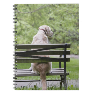 Dog sitting on park bench spiral notebook