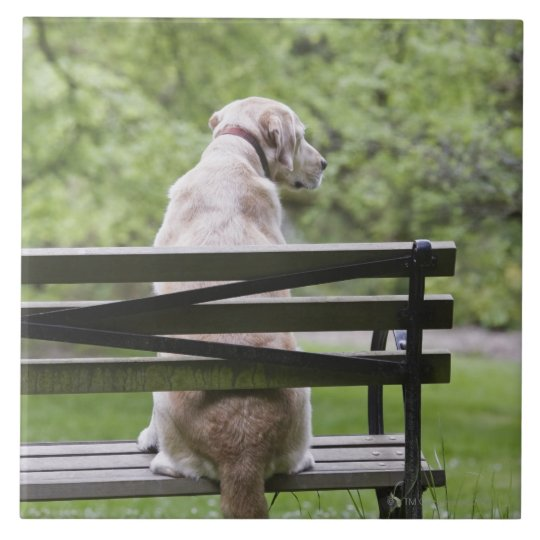 Dog sitting on park bench tile