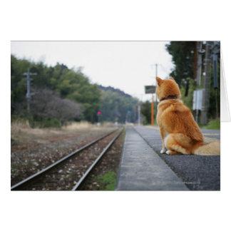 Dog sitting on train station greeting card