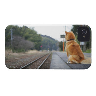 Dog sitting on train station iPhone 4 Case-Mate case