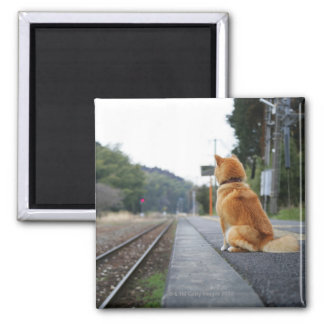 Dog sitting on train station magnet