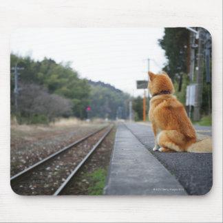Dog sitting on train station mouse mat