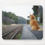 Dog sitting on train station mouse pad