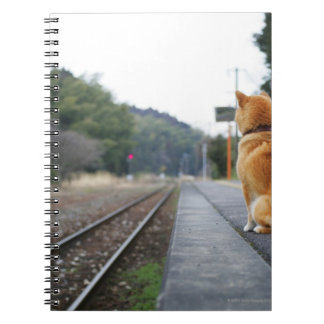 Dog sitting on train station notebook