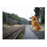 Dog sitting on train station postcard