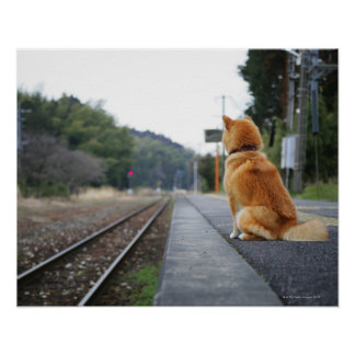 Dog sitting on train station poster
