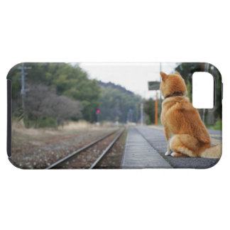 Dog sitting on train station tough iPhone 5 case