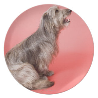 Dog sitting plate