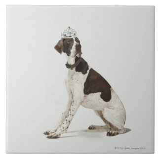 Dog sitting with a tiara on head tile