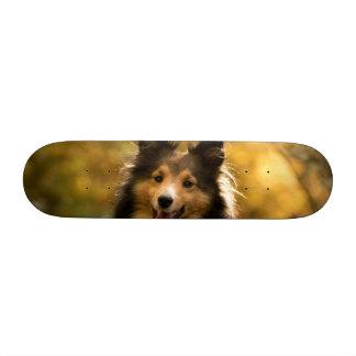 Dog Skate Boards