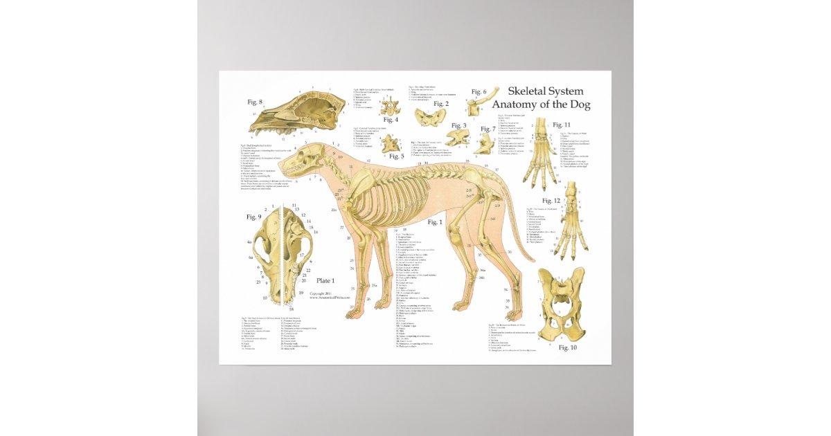 Dog Anatomy Poster Gallery - human body anatomy