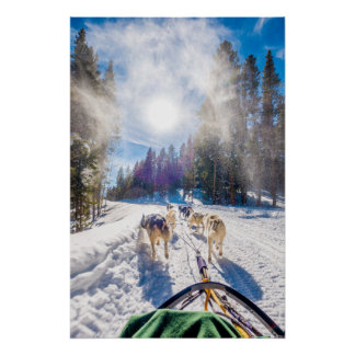Dog Sledding in Beaver Creek, CO Poster