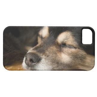 Dog sleeping 2 iPhone 5 covers