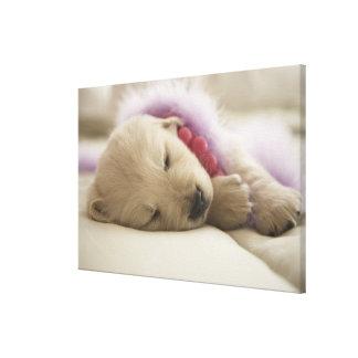 Dog sleeping on bed canvas print