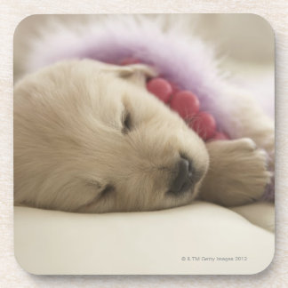 Dog sleeping on bed coaster