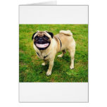 dog smile pug cards