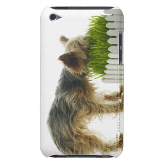 Dog sniffing neighbors yard shot in studio barely there iPod case