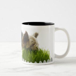 Dog sniffing neighbors yard shot in studio Two-Tone coffee mug
