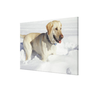 Dog standing in snow canvas print