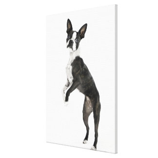 dog standing on 2 legs looking at camera canvas print