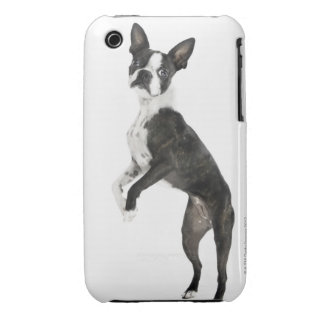 dog standing on 2 legs looking at camera iPhone 3 Case-Mate cases