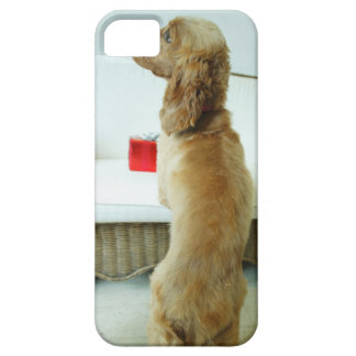 Dog standing on a couch with a gift case for the iPhone 5