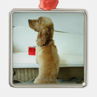Dog standing on a couch with a gift christmas ornament