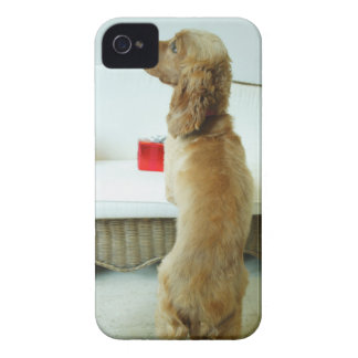 Dog standing on a couch with a gift iPhone 4 Case-Mate case