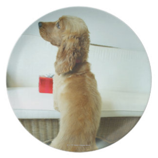 Dog standing on a couch with a gift plate