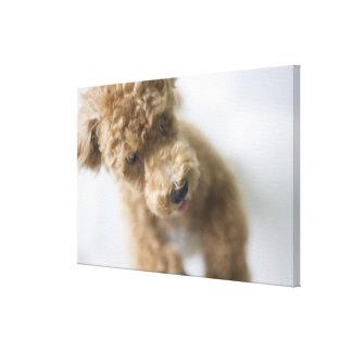 Dog standing on floor canvas print