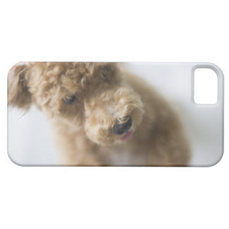 Dog standing on floor iPhone 5 cover