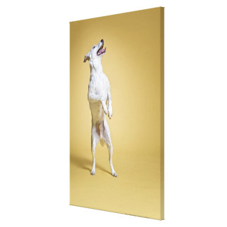 Dog standing on hind legs canvas print