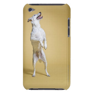 Dog standing on hind legs Case-Mate iPod touch case