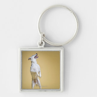 Dog standing on hind legs key ring