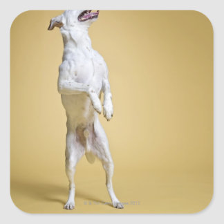 Dog standing on hind legs square sticker