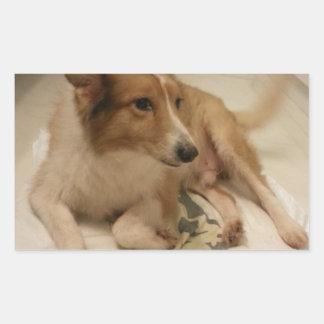 dog rectangular stickers