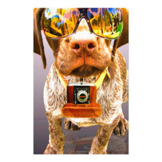 dog sunglasses and a camera in the teeth custom stationery