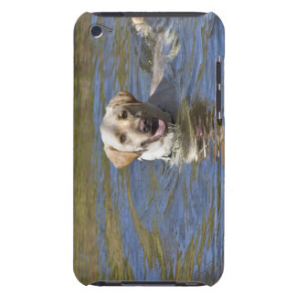 Dog swimming barely there iPod covers